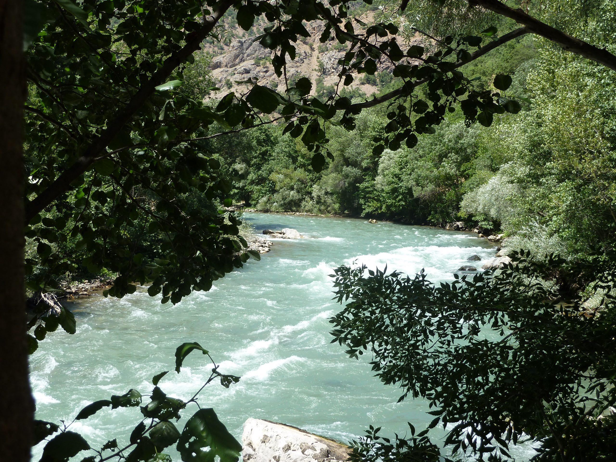 geschlängelt Flusslauf mit weißen Wellenkämmen durch Bäume